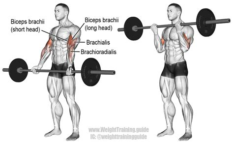 Barbel Curl barbell curl exercise and weight