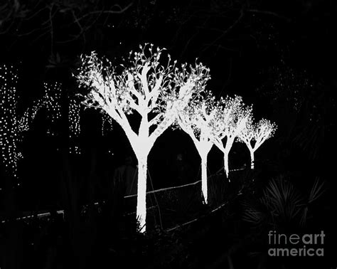 christmas lights in black and white photograph by carol