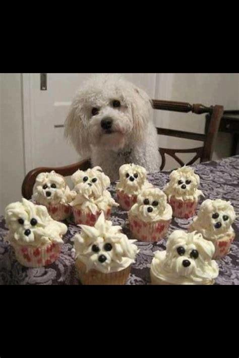 puppy birthday happy birthday puppy puppy puppy animals