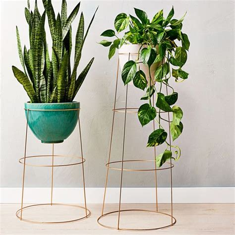 indoor plants 25 best ideas about indoor plant decor on