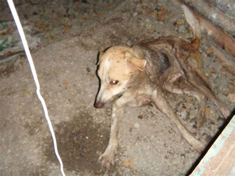 dogs on acid two dogs died after being doused with sulfuric acid