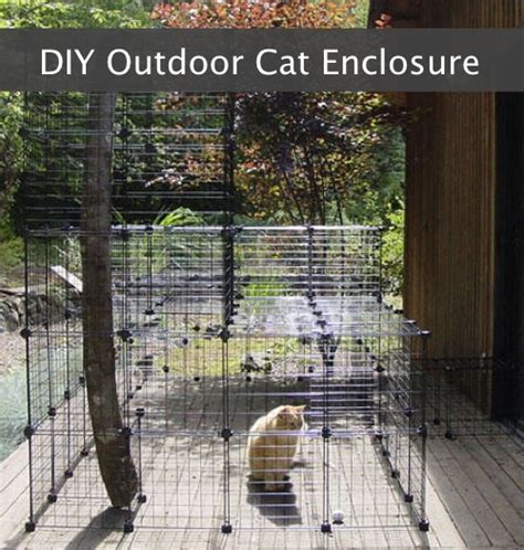 diy outdoor cat enclosure homestead survival