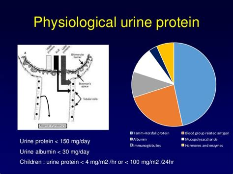 24h urine protein approach to proteinuria