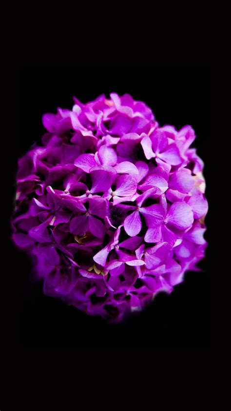 close  photography  purple petaled flower  stock
