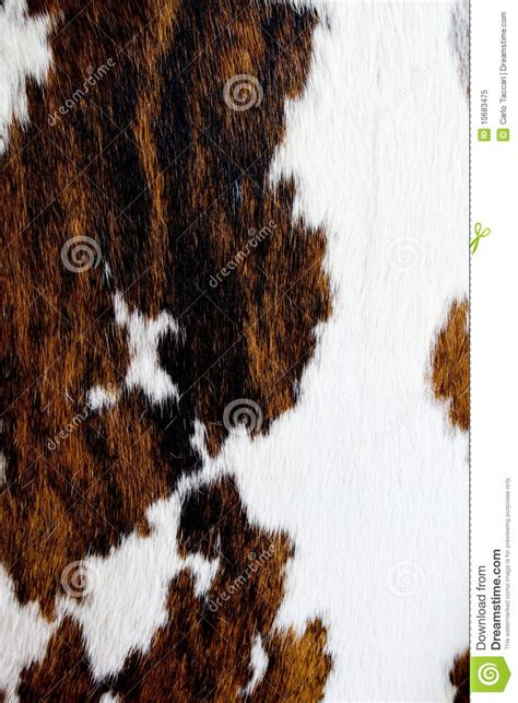 Cow Fur Cow Fur Texture Royalty Free Stock Photo Image 10683475