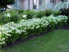 Topiaries Pinterest - 1000 images about storm agapanthus lily of the nile on pinterest gardens alabama and white