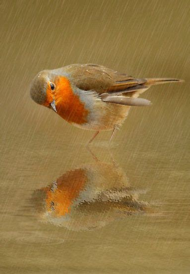 images of love birds in rain bird in the rain and i can t even draw stick people