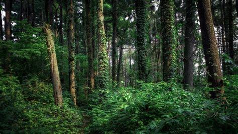 el bosque oscuro the 8466660925 bosque oscuro arboles naturaleza fondos de pantalla hd fondos de escritorio im 225 genes y