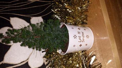 tesco mini small real xmas tree with baby roots tesco 163 3