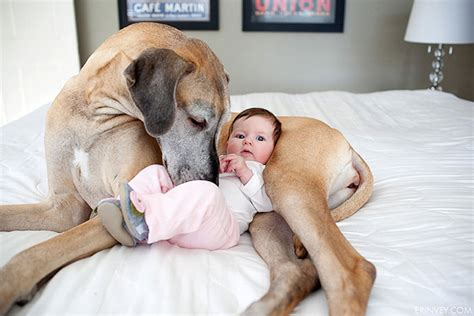 puppies and toddlers 22 and their big dogs
