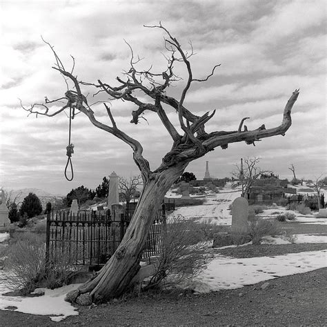 the hanging tree the hanging tree photograph by harry snowden