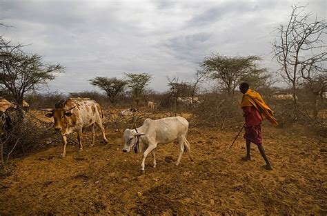 Desertification Essay by Desertification In Africa Essay Thesiscompleted Web Fc2