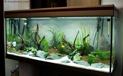 aquarium design in bangladesh fish tank of august 10 at the age of aquariums tropical