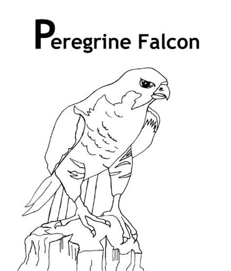 peregrine falcon coloring pages and facts