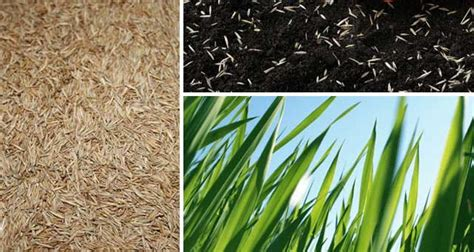 Landscape Fabric Grass Seed Grass Seed Shade Mix