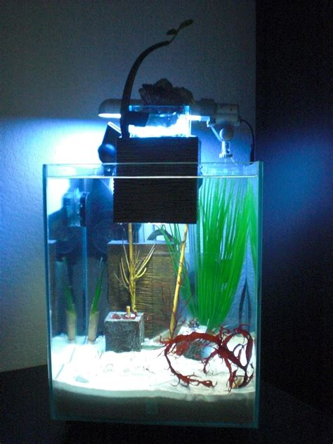 fluval edge 2 beleuchtung fluval chi seahorse tank seahorse keeping