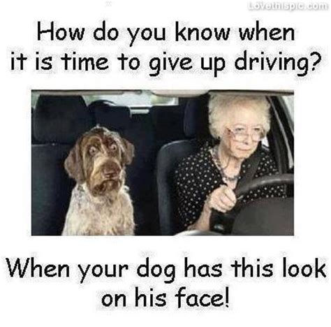 Dog Driving Meme - time to give up driving pictures photos and images for