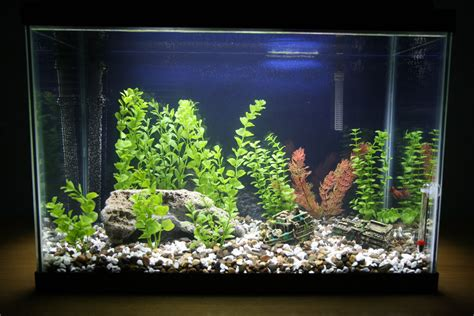home aquarium decorations home aquarium decoration design ideas for house