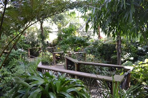 Uf Butterfly Garden sewn and grown butterfly rainforest at the florida museum