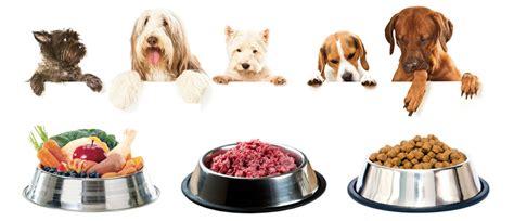 alimentazione casalinga per cani dieta barf per il e non animalieanimali eu