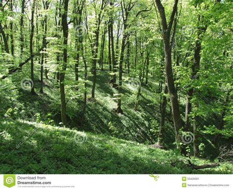 deep forest green beautiful deep green forest stock photo image 53420301