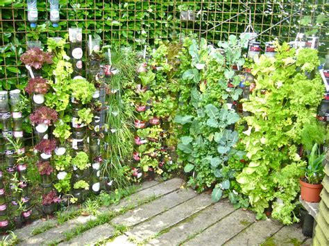 Growing Vertical Gardens Vertical Gardening Desertification