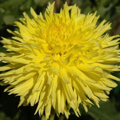 17 best images about 2701 connecticut on pinterest 17 best images about my 2013 dahlia garden on pinterest