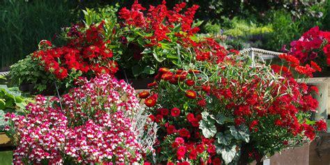 Garten Pflanzen Sommer by Garten Ideen Und Pflanzen Kientzler
