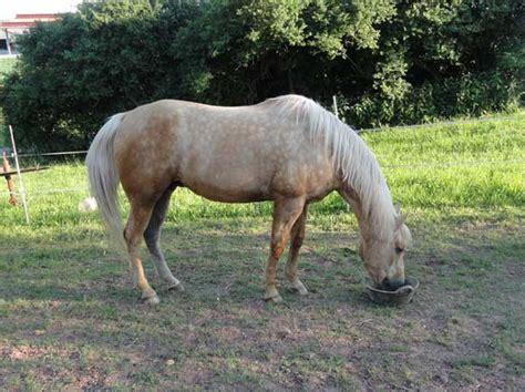 wann ist ein pferd alt alte pferde gut 252 ber den winter bringen www