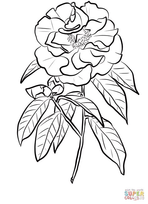 camellia flower coloring page click the camellia reticulata coloring pages to view