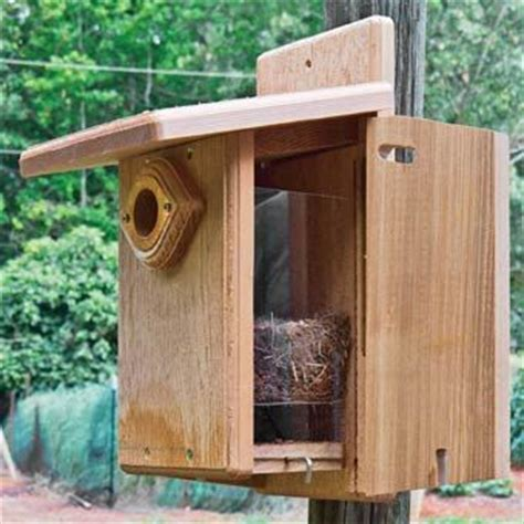 ultimate bluebird house outdoor to do