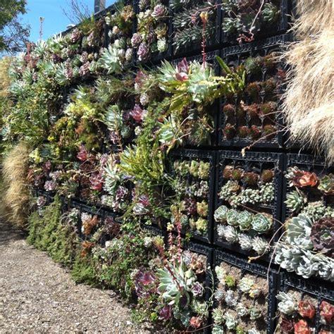 Cactus Vertical Garden Cactus Garden Wall Olvera Los Angeles Ca