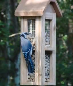 blue jay feeder use blue jay food for feeding blue jays