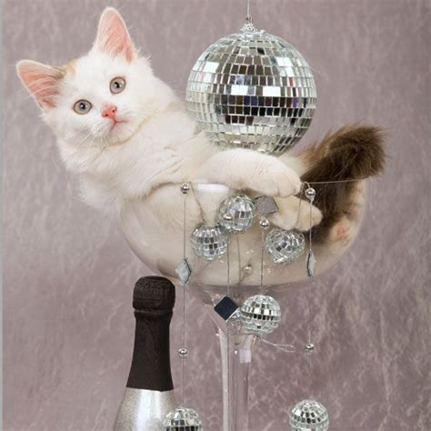 Happy New Year Cat Meme - pin by jennifer simmons on the ball drops at midnight