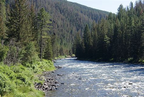 fishing the gallatin river montana montana seven hot fly fishing spots the nature conservancy