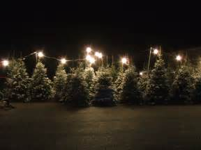 Pre Decorated Christmas Tree Christmas Tree Lot 3 By Parkins73 On Deviantart