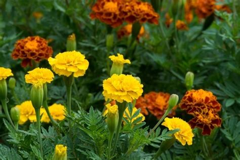 What Flowering Plants Should I Grow In My Garden During What Flowers Should I Plant In My Garden