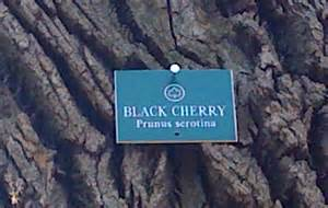 tree name tags manhattan flora out walking the