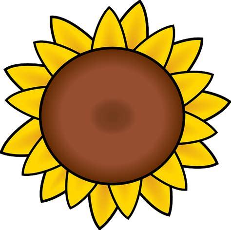 Sunflower Outline Png by Free Vector Graphic Sunflower Petals Drawing Summer Free Image On Pixabay 304230