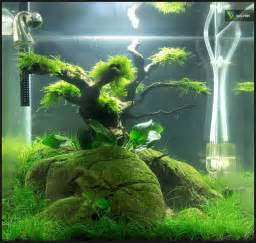 Aquascaping For Beginners by 30 Liter Nano Cube Nach 8 Wochen Aquascaping