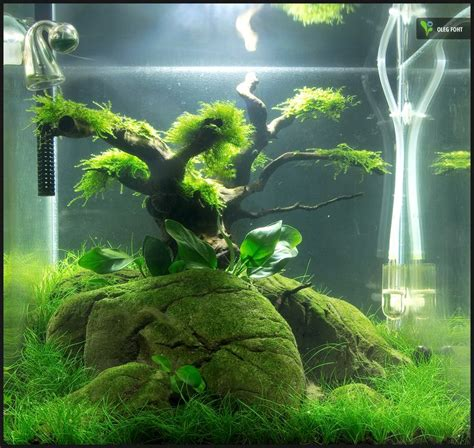how to aquascape an aquarium 30 liter nano cube nach 8 wochen aquascaping