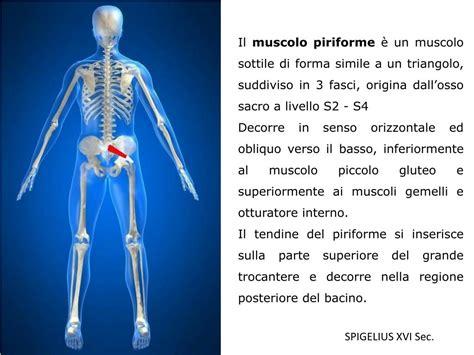 muscolo otturatore interno ppt la sindrome piriforme powerpoint presentation