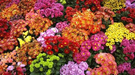 indian garden flowers 10 fabulous flower shows in india you must not miss