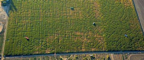 calls  people lost  worlds biggest corn maze