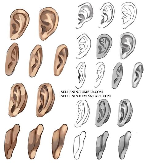 Drawing Ears by 71 Best Drawing Ears Images On Drawing Ideas