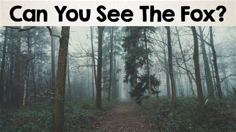 Can See What You Search Nobody Can See All The Animals Optical Illusions Brain Teasers 2