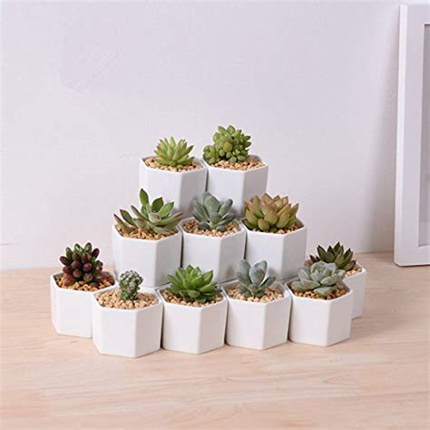 succulent turtle cute office desk plants and planters from etsy popsugar smart living hexagon white ceramic succulent pot perfect planter