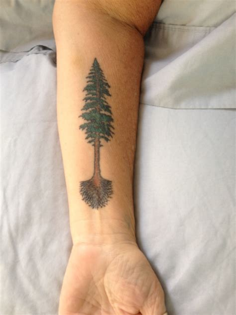 redwood tree tattoo designs pinterest