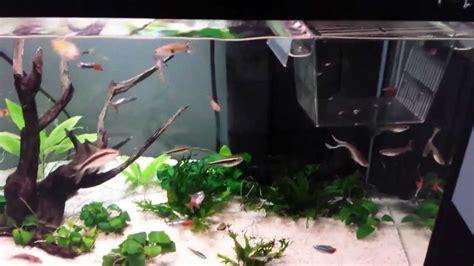 arredare un acquario il mio acquario 60 litri
