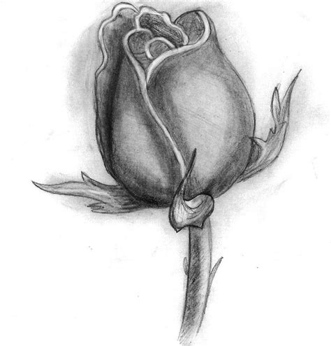 pencil drawings charcoal drawings and art galleries rose rose flower by trixsmia on deviantart